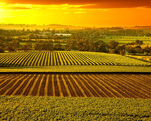 Barossa Valley wine country. Photo by Tom Armstrong, student participant