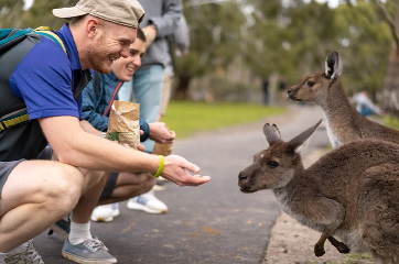 Visiting with the Kangaroos